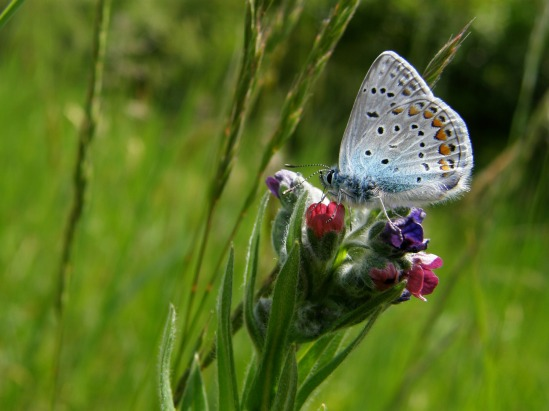 grass_plants_butterfly